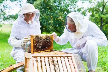 Beekeeper with smoker controlling beehive and comb frame Stock Photo