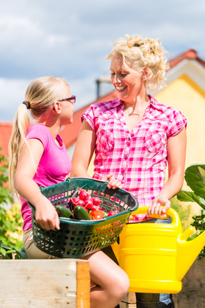Mother and daughter working in garden harvesting and watering vegetables in front of their house photo