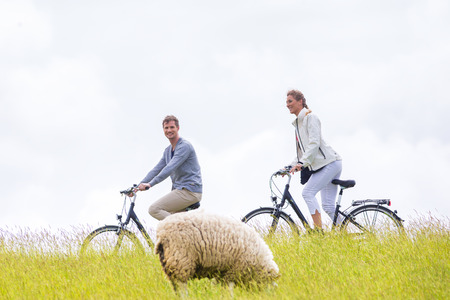east riding: Couple having bicycle tour with bike at levee with sheep