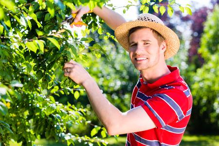 pruning: Man pruning tree in orchard garden