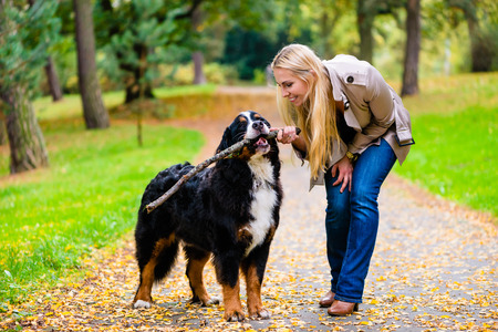 retrieving: Woman and dog at retrieving stick game in fall park on dirt path Stock Photo
