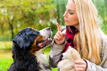 공원에서 소녀가 앉아 명령을주는 순종 그녀의 강아지를 훈련
