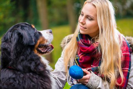 persona caminando: Mujer rubia jugando con su perro de montaña de Bernese y el juguete en el Parque de otoño