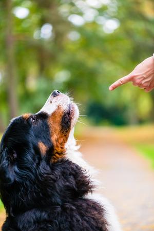 obedience: Mujer que hace el entrenamiento de la obediencia con el perro practicar orden de sentado Foto de archivo