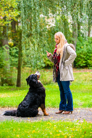 teaching adult: Girl in autumn park training her dog in obedience giving the sit command