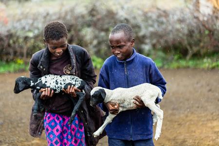 cabra: Niños Massai llevan cabras bajo la lluvia
