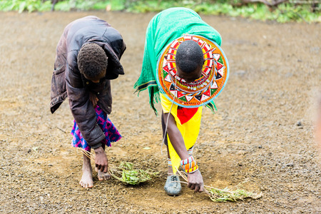 doing chores: Massai women sweeping the floor doing chores