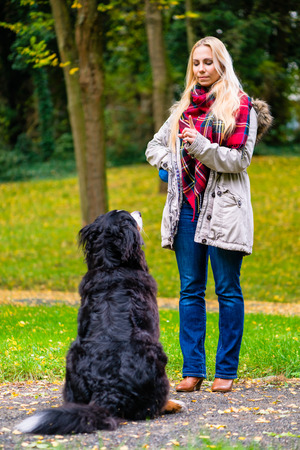 obedience: Muchacha en parque del otoño entrenar a su perro en obediencia dando la orden de sentado