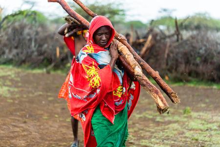 collecting: Massai man collecting firewood