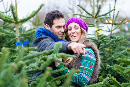 christmas trees: Couple looking to buy Christmas trees