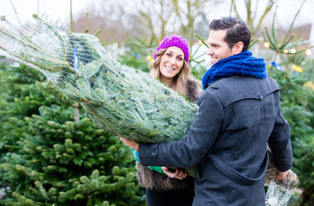 bought: Couple carrying bought Christmas tree Stock Photo