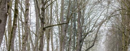 barren: Trees without leaves in barren winter landscape