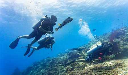 Blowfish accompanies group of tourists scuba diving at coral reef Foto de archivo