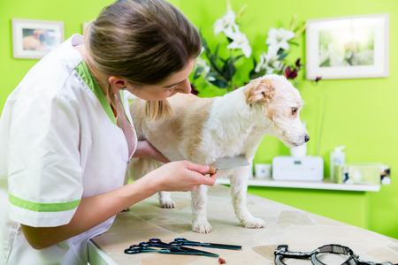 cropping: Woman is examining Dog for flea at pet groomer