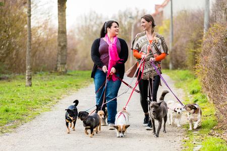 cuidadores de perros paseando a sus clientes Foto de archivo