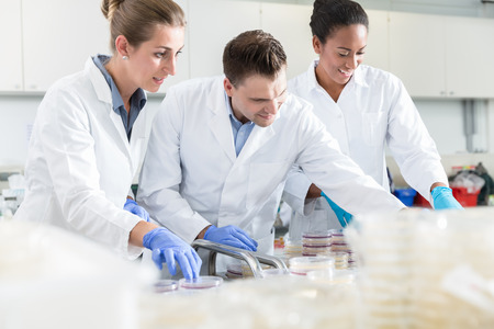 food testing: Group of scientists in food laboratory with samples in petri dishes