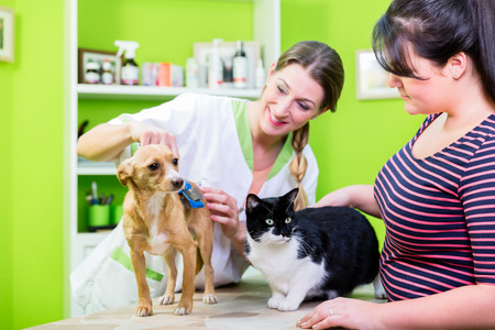 cat grooming: Cat and dog together at vet or pet hairdresser
