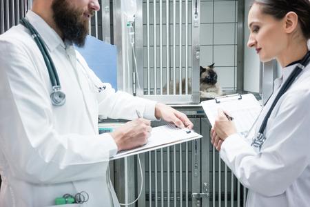 medical doctors: Vet doctors on visit round in ICU of veterinarian clinic