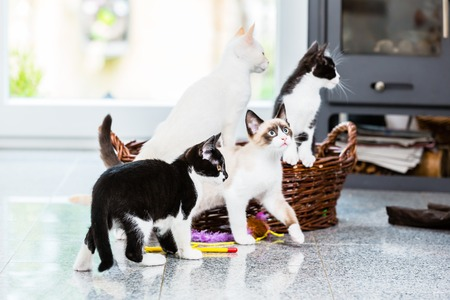 mimbre: Cute kittens looking with curiosity in apartment