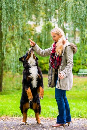 Hund im Park sitzen und betteln um Frau, das Laub ist bunt Standard-Bild