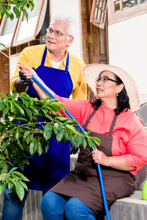 Asian senior couple smiling while watering green cultivated plants with a garden hose in summer