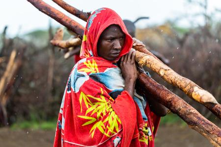 장작을 모으는 마사이 (Massai) 남자 스톡 콘텐츠
