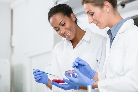 Women in research laboratory talking about tests on germ samples doing eperiment Stock Photo