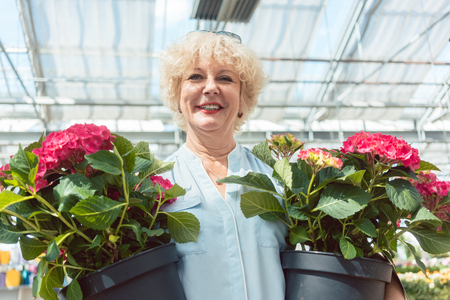 Portrait of an active senior woman smiling while holding two potted ornamental plants in the greenhouse of a flower market