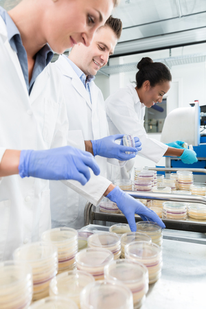 Group of scientists in food laboratory with samples in petri dishes