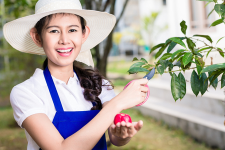 Side view portrait of young Asian woman pruning cultivated fruit tree in summer
