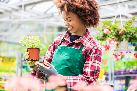 Latin American young woman smiling happy while holding a decorative potted houseplant with green leaves during work at a modern flower market Stockfoto