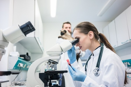 Lab assistant and veterinarian examining tissues sample from a cat under the microscope Stock Photo