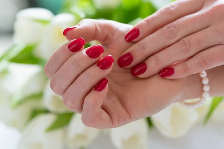Close-up of the hands of a young woman with elegant red manicure against white tulips in a trendy nail salon Stock Photo