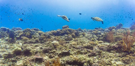 Sea turtle and many fish at beautiful tropical reef under water Standard-Bild