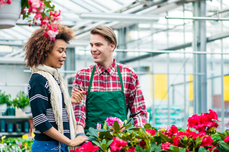 Beautiful Latin American young woman talking with his friend at his workplace in a modern flower shop with various ornamental houseplants for sale