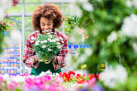 Portrait of a dedicated female florist smiling with professional satisfaction while holding a beautiful potted daisy flower plant for sale in a modern shop Stock Photo