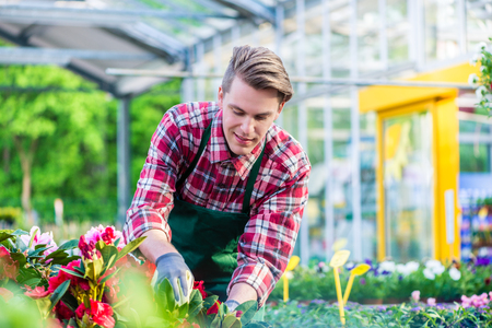 Dedicated handsome florist wearing red checkered shirt and gardening gloves during work in a modern flower shop with various potted flowers for sale