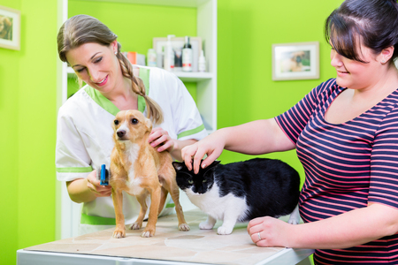 Cat and dog together with their owner at vet or pet hairdresser