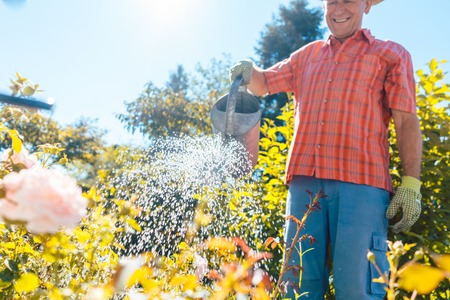 Active senior man with a healthy lifestyle smiling while watering plants in the garden in a tranquil day of summer