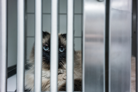 Sick cat waiting for treatment in cage of veterinarian clinic