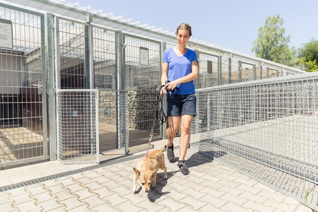 Woman walking a dog in animal shelter wanting to adopt the animal
