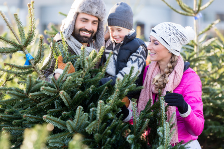 Family buying Christmas tree on market taking it home Stock Photo