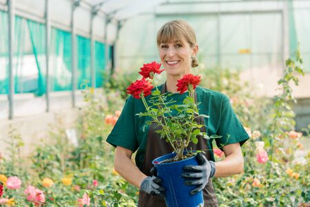 Gardener woman showing rose into the camera standing in hothouse Zdjęcie Seryjne