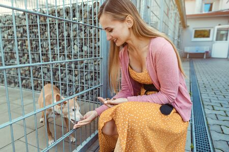 Cheerful woman petting a dog in the animal shelter