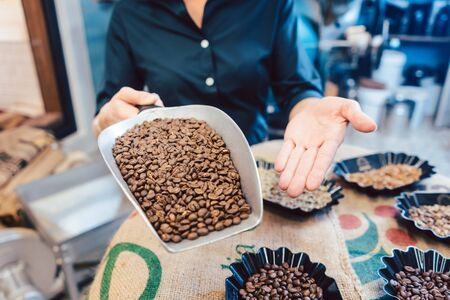 Different kinds of coffee beans in the roastery shown by barista