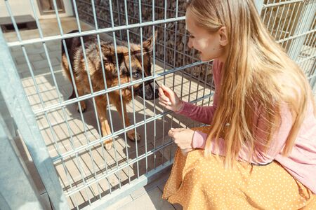 Woman looking for a dog to adopt in an animal sanctuary, playing with two