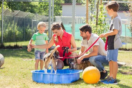 Familie, die mit Hund vom Tierheim im Pool mit Wasser spielt