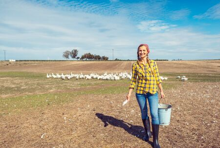 Farmer with her geese on a poultry farm in the country Banco de Imagens