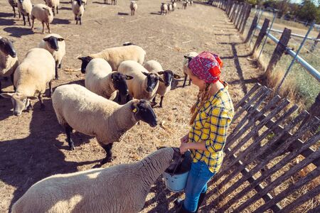 Famer woman with her flock of sheep around her