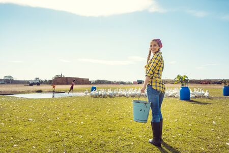 Farmer woman feeding the geese on a meadow